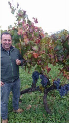 Etna wijngaard en wijnmaker