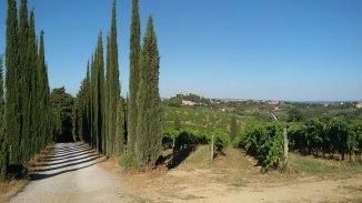 Toscaans wijn landschap met San Gimignano in de verte