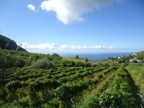 wijngaarden op Salina