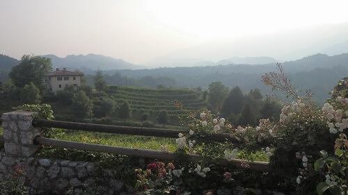 Prosecco heuvels met dauw/mist