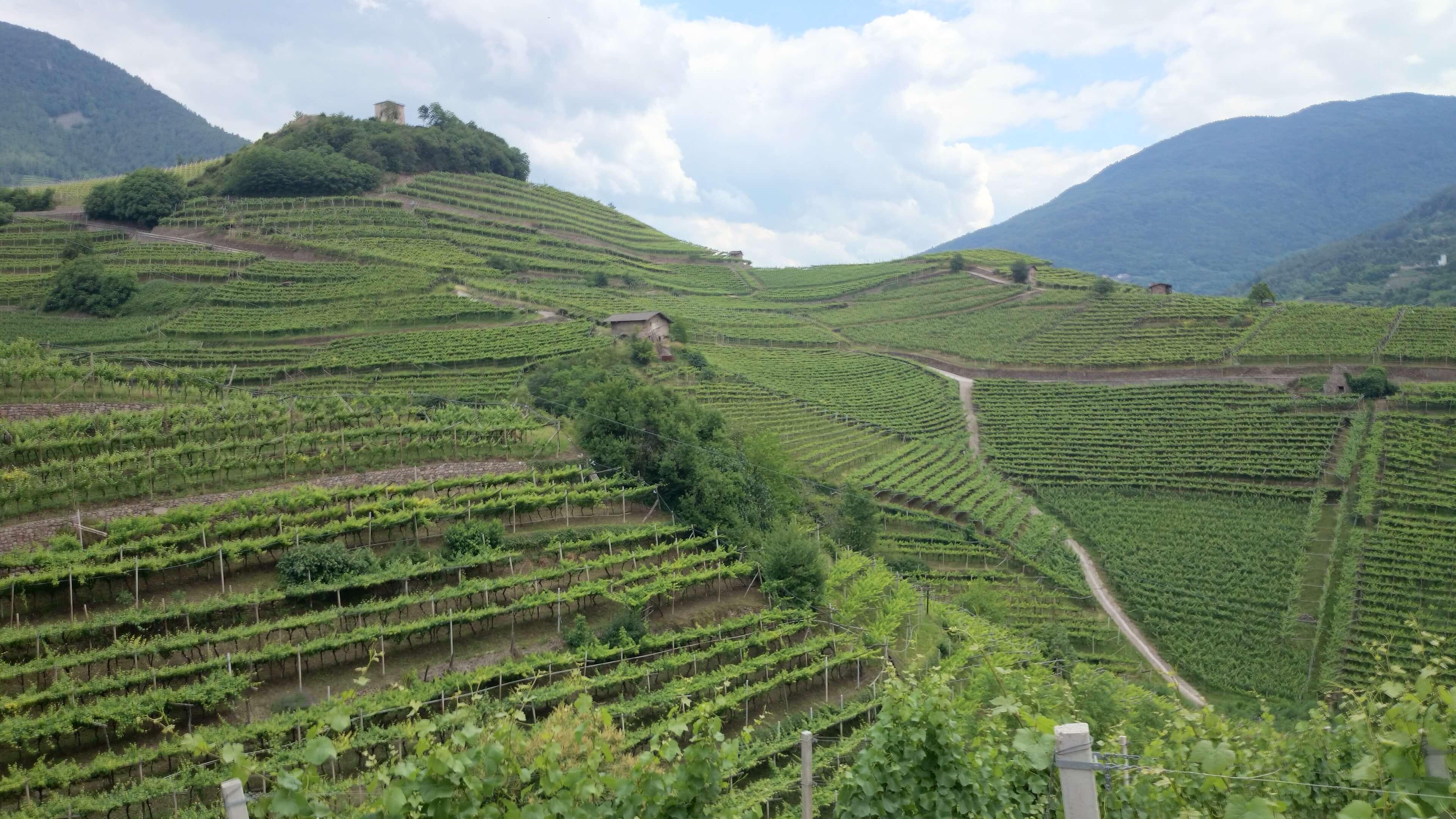 steile wijnhellingen in Trentino