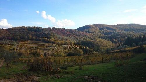 Chianti Classico wijngaarden in de herft