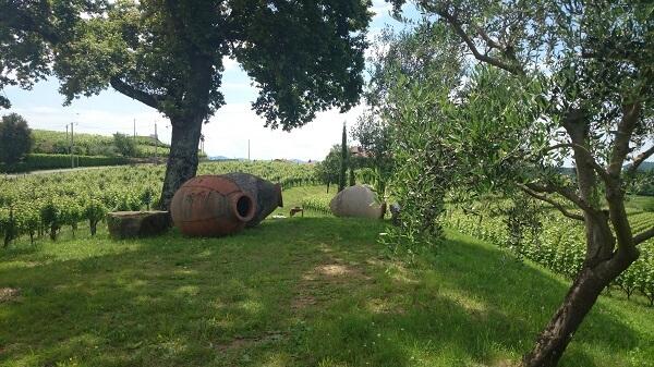 Georgische quevri (amforen) in de wijngaard bij Gravner in Friuli